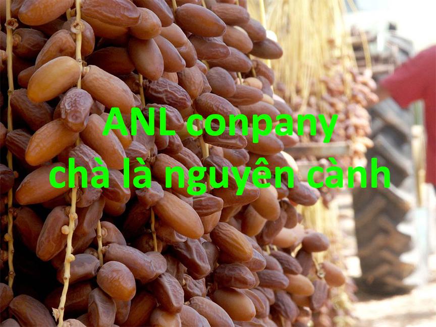 chà là nguyên cành giá sỉ được ANL thu mua, nhập khẩu từ Tunisia. Với 2 quy cách là hàng xá (tính theo kg) và hàng đóng gói có thương hiệu.