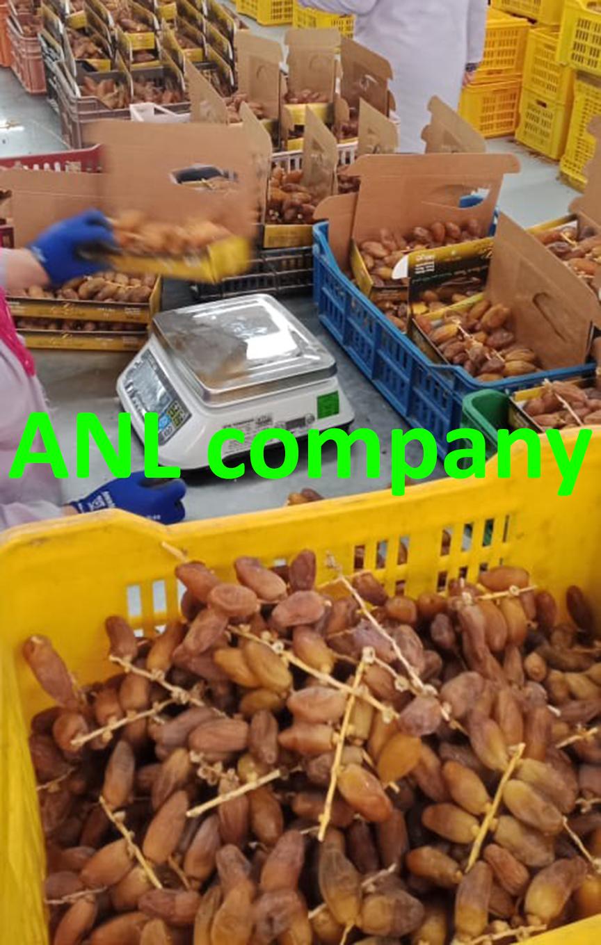 chà là nguyên cành hàng xá được ANL thu mua, nhập khẩu, phân loại. Cung cấp và phân phối sỉ tại Việt Nam