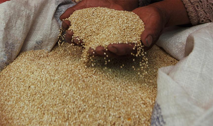 sản phẩm diêm mạch của chúng tôi được kiểm tra chất lượng thường xuyên, và không trữ kho lâu ngày. Hạt luôn mới, không có mùi ẩm mốc