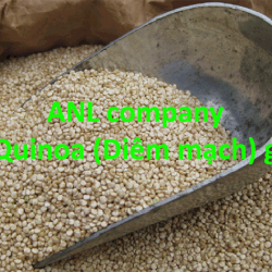 hạt quinoa hay còn gọi là hạt diêm mạch, được ANL nhập khẩu số lượng lớn và cung cấp giá sỉ tại Việt Nam, hình thức đóng gói theo bao 25kg/bao