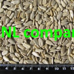 chất lượng nhân hạt hướng dương ANL. Hạt kích cỡ vừa phải, thơm ngon, vị đặc trưng của hạt hướng dương, không hôi dầu.
