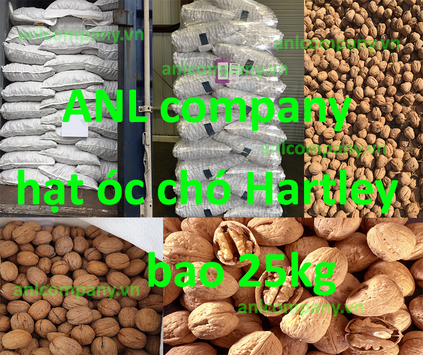 sản phẩm hạt óc chó giá sỉ được Công ty ANL chúng tôi nhập khẩu trực tiếp từ Mỹ và cung cấp sỉ cho thị trường Việt Nam