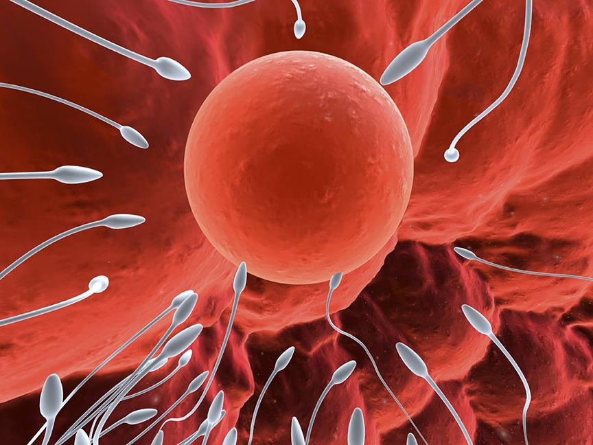 ít ai biết rằng hạt óc chó cũng tốt cho sức khỏe sinh sản của nam giới, đã được khoa học chứng minh
