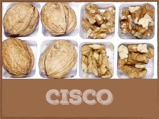 hạt óc chó Cisco, 1 trong những giống quả óc chó của Mỹ