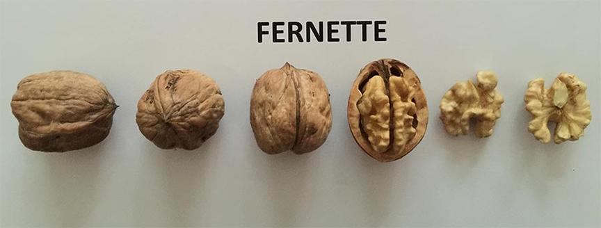 hạt óc chó Fernette, 1 trong những giống quả óc chó được trồng tại Mỹ