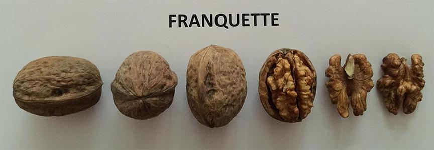 hạt óc chó Franquette, 1 trong những giống quả óc chó của Mỹ