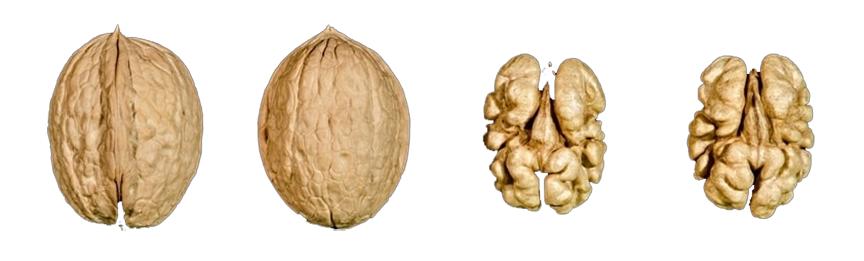 hạt óc chó Sunland, 1 trong những giống quả óc chó được trồng tại Mỹ